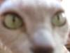 Nico van Leeuwen's Avatar